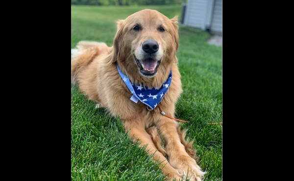 To celebrate National Dog Day, News 8 staffers shared photos of their canines. Above is a photo of Executive Producer Spencer Wheelock's dog, Bo. The dog is named after legendary University of Michigan football coach Bo Schembechler.