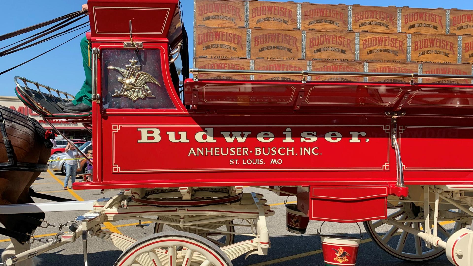 Budweiser Clydesdale Grand Rapids