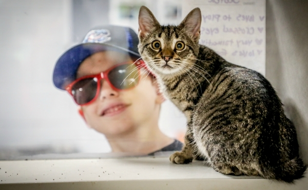 Several shelters throughout West Michigan participated in this year's Clear the Shelters event.