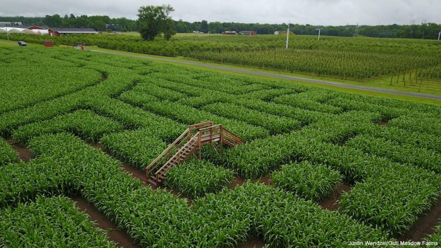 Luke Bryan corn maze Gull Meadow Farms Richland Township