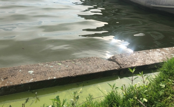 A photo of Morrison Lake after test detected a toxin that a can produce a harmful algae bloom. (Aug. 21, 2019)