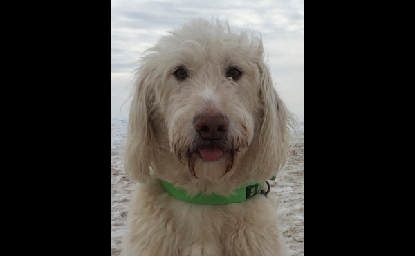To celebrate National Dog Day, News 8 staffers shared photos of their canines. Above is a photo of Anchor Susan Shaw's dog, Charlie.