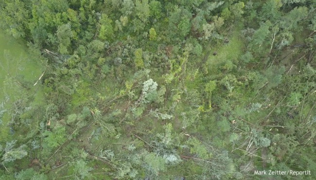 bird's-eye view of damaged trees in forest