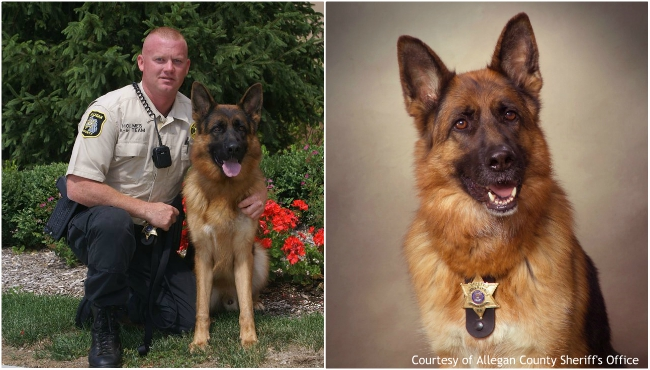 A collage of K-9 Etto and his handler, retired Deputy David Holmes. Courtesy of Allegan County Sheriff's Office.