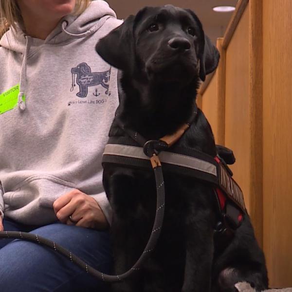 West Ottawa therapy dog Milo