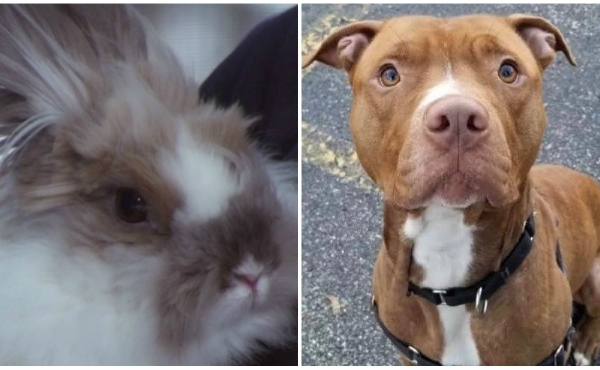 A collage of Aaron and a bunny, the Kent County Animal Shelter's pets of the week. (Oct. 18, 2019)
