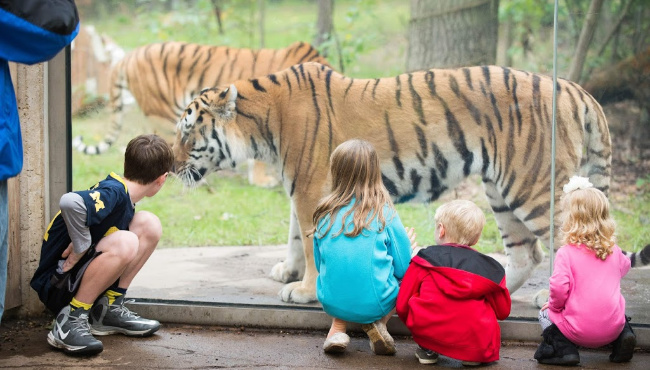 John Ball Zoo Offers Special Black Friday Deal Woodtv Com