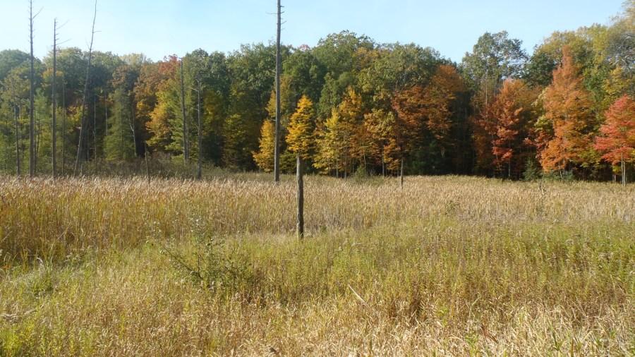 newaygo county dnr land auction