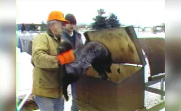 on the michigan road mink and fox farm