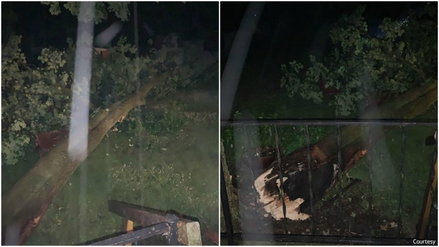 Courtesy photos of down trees in Barry County's Hastings after a storm on June 26, 2020.