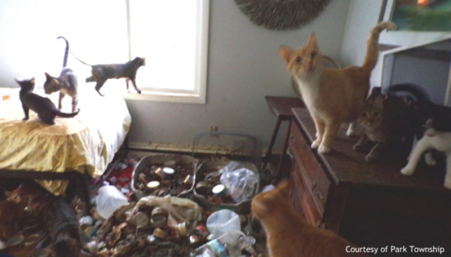 A photo from a cat hoarding investigation in St. Joseph County on Aug. 4, 2020. (Courtesy of Park Township)