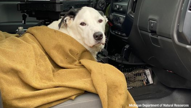 Cody the dog after being rescued by Michigan Department of Natural Resources Conservation OfficerJeff Ginn. (Courtesy of the Michigan Department of Natural Resources)